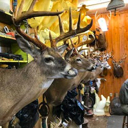 Click to view profile for Harden's Taxidermy